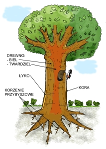 drzewo-kolor